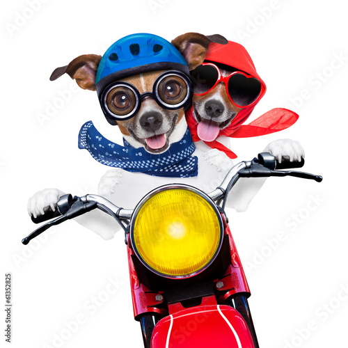 Poster motorbike couple of dogs