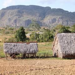 Cuba - Vinales region