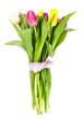 colorful tulips on white background