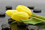 Bukiet tulipanów na kamieniach do spa