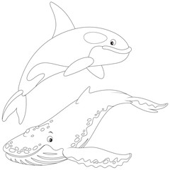 killer whale and hunchbacked whale
