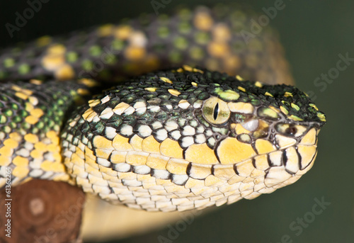 Portrait of a yellow-green snake