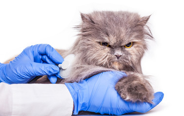 cat on admission to a veterinary clinic