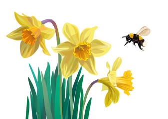 Daffodils and bumblebee