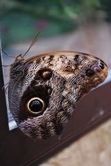 Mariposa en ventana