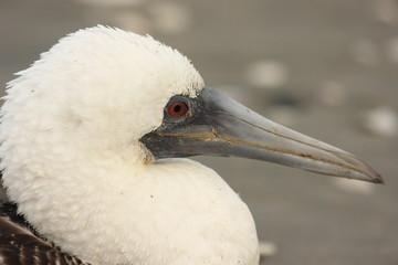 uccello marino