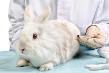 Tierarzt bei Behandlung Kaninchen beim Spritze geben