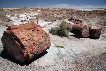 Large section of petrified wood at Petrified Forest National Par