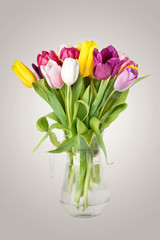 Tulips Flowers in  Vase isolated on white