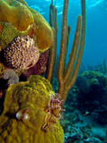 details from the coral reefs at the caribbean sea