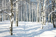 Footpath in sunny winter forest