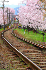 Sakura tree and railroad