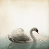 swan Vintage background