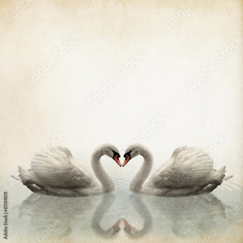 a pair of swan vintage background