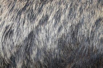 european wild boar fur