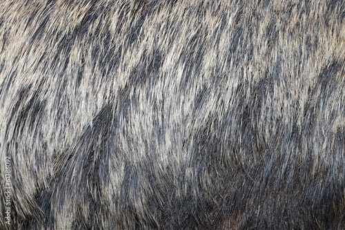 european wild boar fur