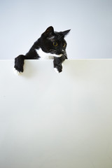 Pretty cat with empty board