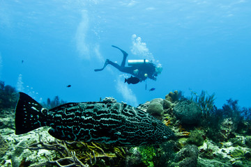 Divers and wildlife