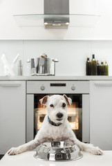 Terrier waiting for a healthy meal