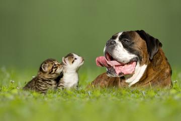 Hund mit zwei kleinen Kätzchen