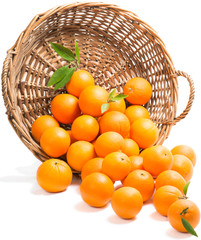 Oranges  scattered