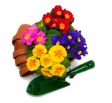 primula flowers, ceramic pots and shovel isolated on white backg