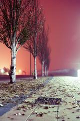 Paisaje nocturno de ciudad. Acera y arboles
