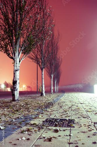 Paisaje nocturno de ciudad. Acera y arboles - 61402888