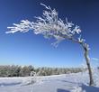 Frozen tree on winter.