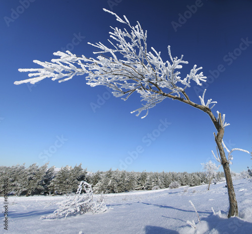 Frozen tree on winter.