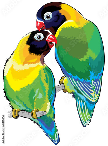 pair of masked lovebirds