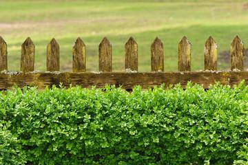 Alter Gartenzaun mit Buchsbaumhecke