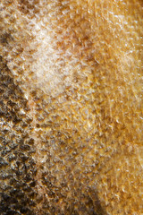 Salmon fish scales grunge texture background