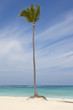 Tall palm tree on tropical white sand beach