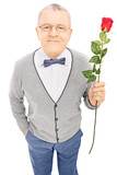 Romantic senior gentleman holding a rose and looking at camera