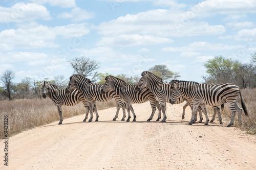 Zdjęcia na płótnie, fototapety na wymiar, obrazy na ścianę : Zebra crossing road, Kruger National Park, South Africa