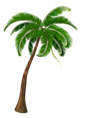 Palm tree. Vector.