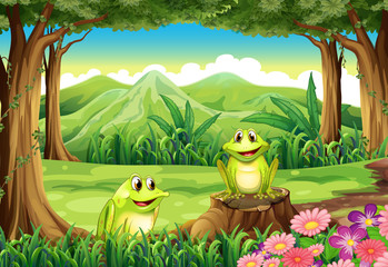 Two frogs at the forest