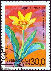 Tulipa kaufmanniana (Uzbekistan 1993)