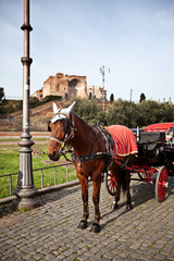 Rome in January: Horse near Coliseum in Rome, Italy.
