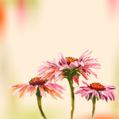 Oil painting. Echinacea. Greeting Card.