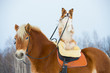 Leinwandbild Motiv Red dog on the horse