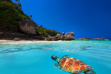 Green Turtle at Similan Islands