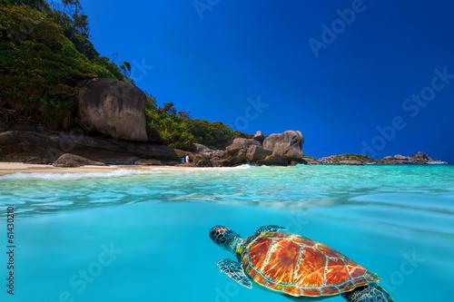 Papiers peints Recifs coralliens Green Turtle at Similan Islands
