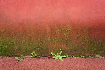 Hintergrund rote Wand mit Bewuchs