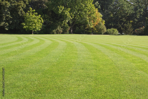 green, striped lawn in the park - 61433847