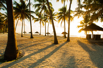 Hammock, huts and palm trees in tropical paradise