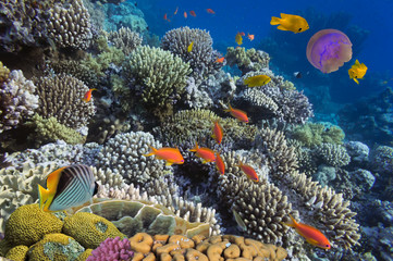 Underwater life of Red sea in Egypt