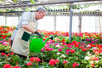 Worker watering plants