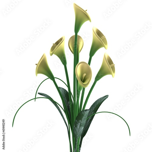 realistic 3d render of cala lilly